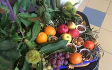 Dia Mundial da Alimentação celebrado nas Escolas do Concelho