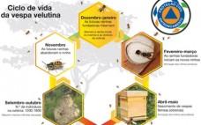 Cuidados a ter com ninhos de Vespa Velutina ou Asiática