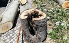 Avaliação Fitosanitária das Árvores do Concelho