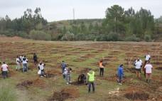 Movimento Terra de Esperança realiza arborização no Parque Verde do Bonito