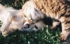Novas Regras de Identificação dos Animais de Companhia